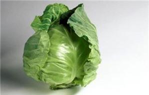 Bắp cải chống béo phì
